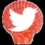 Sea Shell - twitter